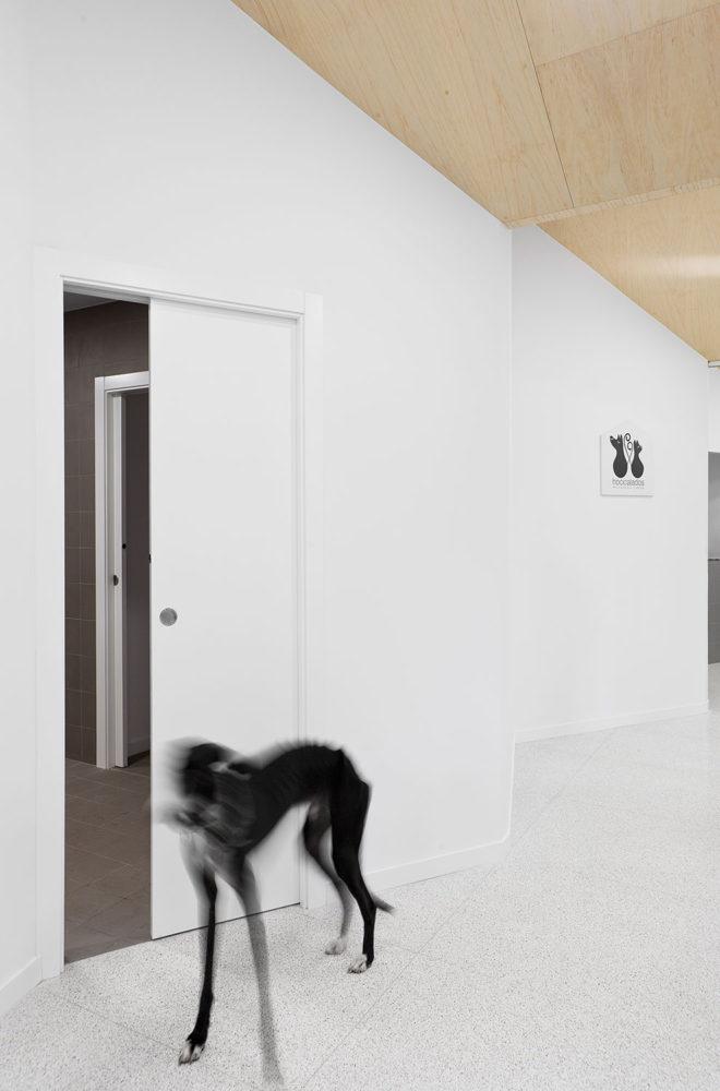 hocicalados peluqueria canina 05